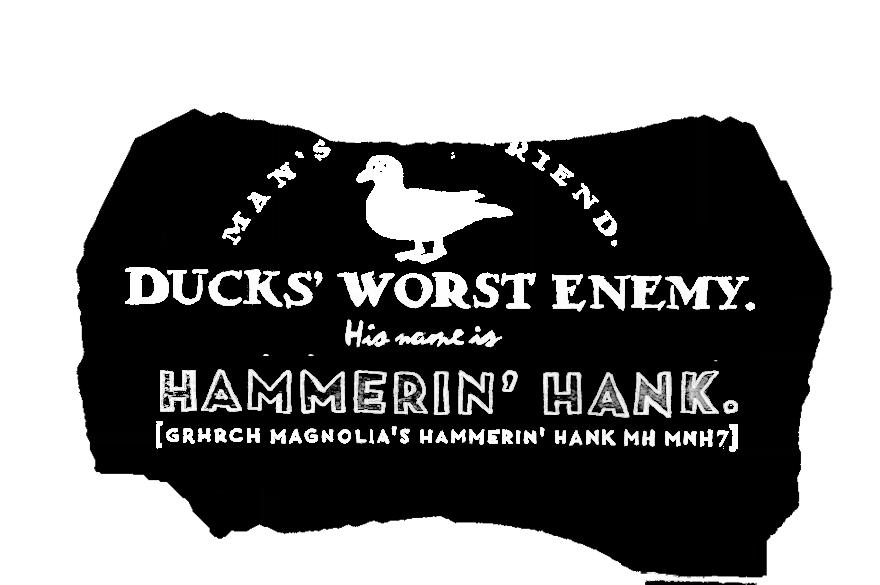 HAMMERIN' HANK [GRHRCH MAGNOLIA'S HAMMERIN' HANK MH MNH7]